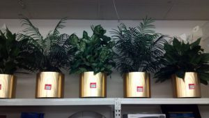 Faux Plants with Brass Planters - Used
