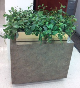 Planter with Plant - Used